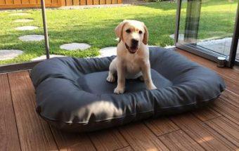 hundebetten f r zuhause hundeboxen bucher. Black Bedroom Furniture Sets. Home Design Ideas